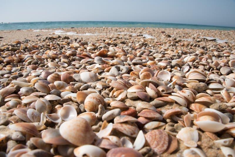 Lege gemengde zeeschelpen op het overzeese zand stock foto
