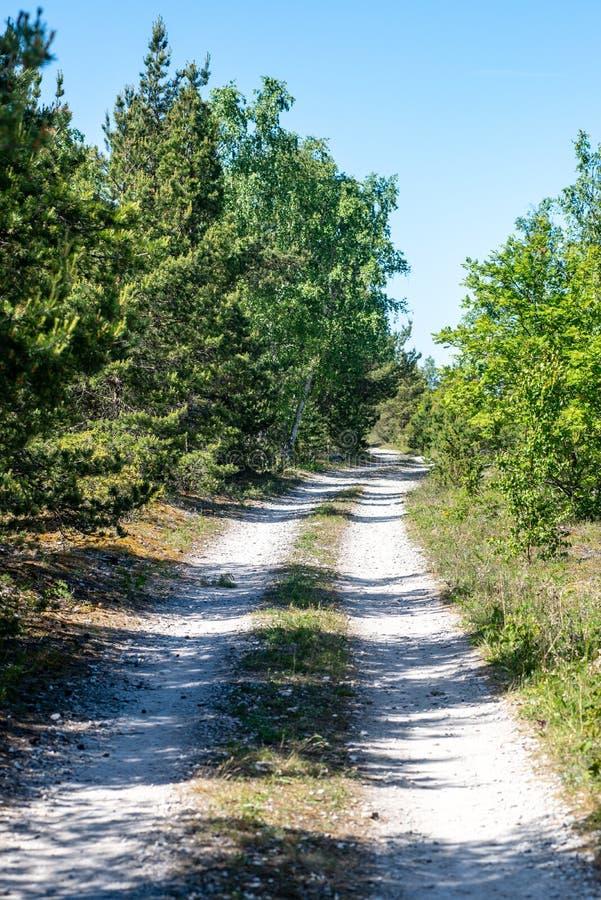 lege grintweg in de herfst royalty-vrije stock foto