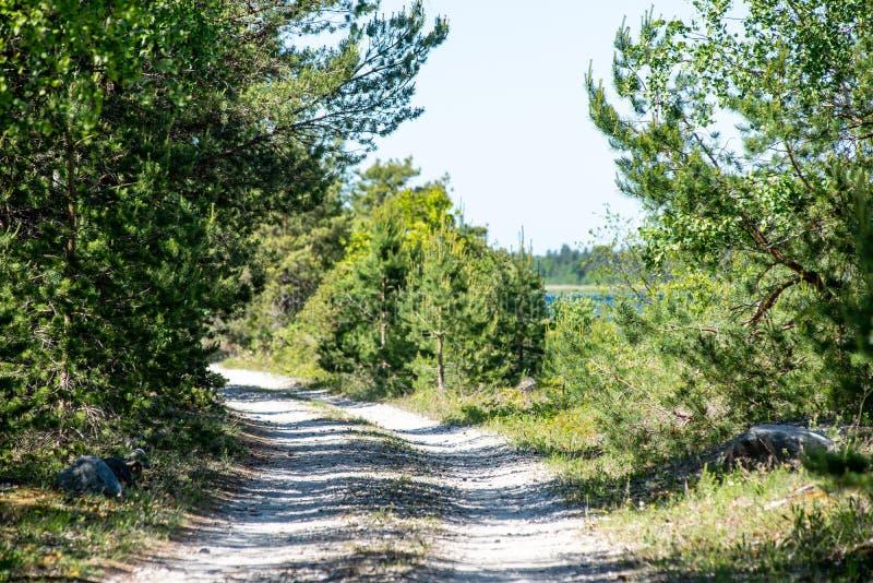 lege grintweg in de herfst stock afbeeldingen