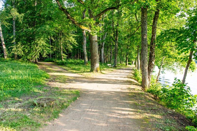 lege grintweg in de herfst stock fotografie