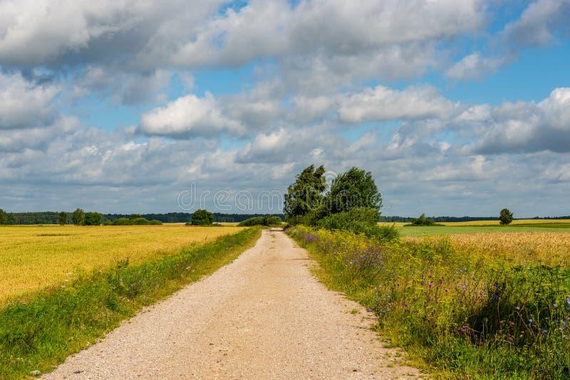 lege grintweg in de herfst stock foto