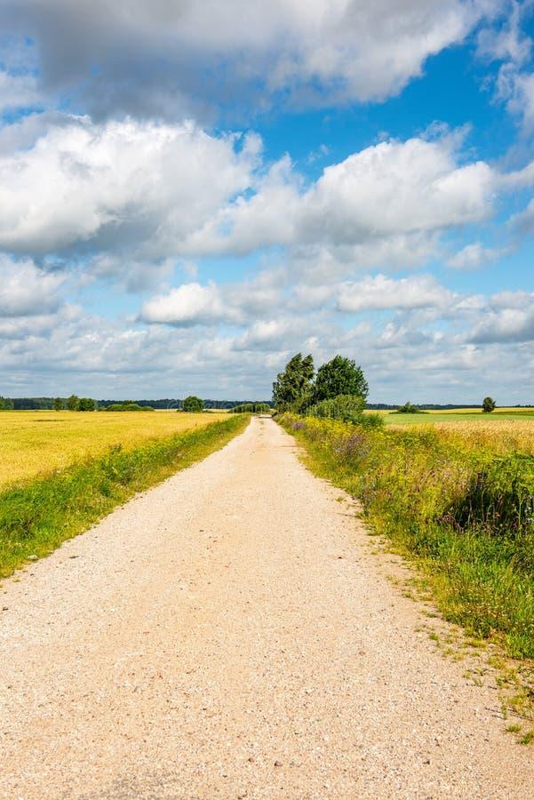 lege grintweg in de herfst royalty-vrije stock afbeelding