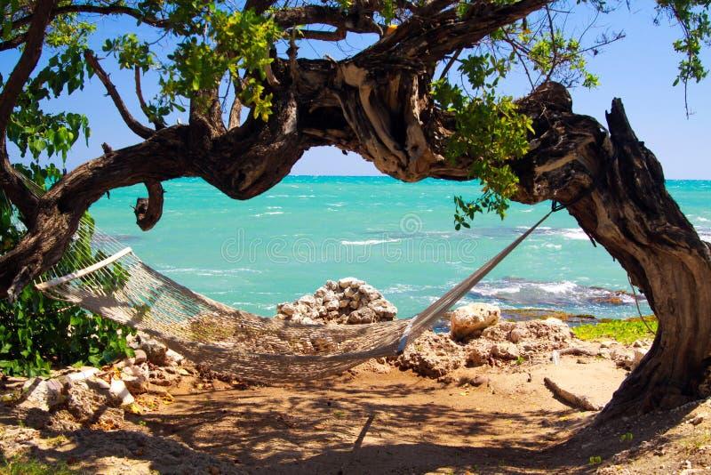 lege Hangmat onder verdraaide overspannen bochtige boom met turkooise ruwe oceaan, Jamaïca stock foto's