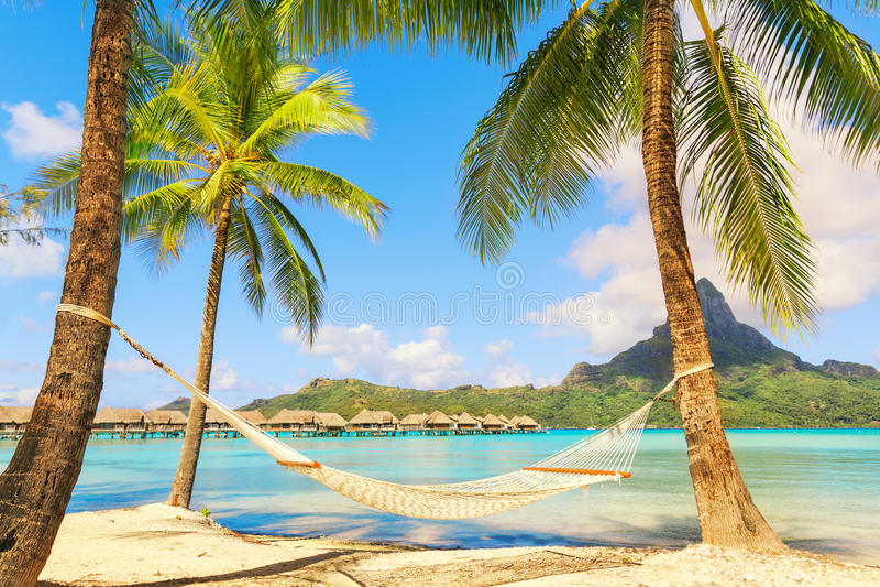 Lege hangmat tussen palmen op tropisch strand stock foto