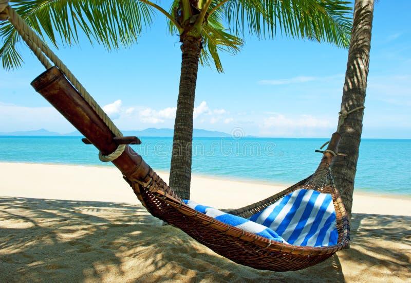 Lege hangmat tussen palmenbomen stock fotografie