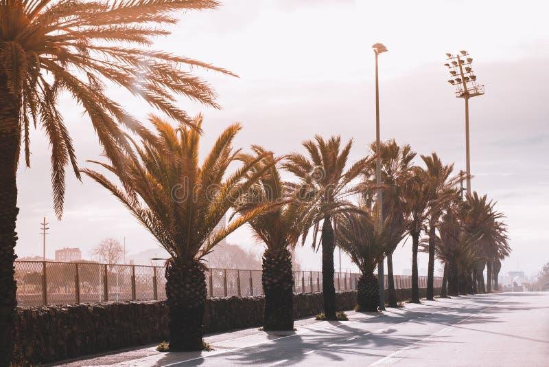 Lege het lopen weg in het Park met palmen en banken op Th royalty-vrije stock afbeeldingen