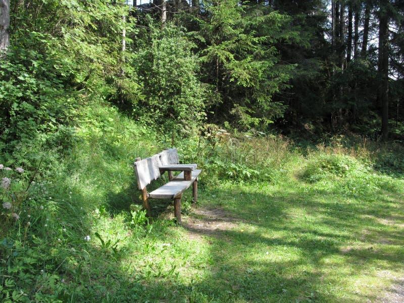 Lege houten bank voor rust in het bos stock afbeeldingen