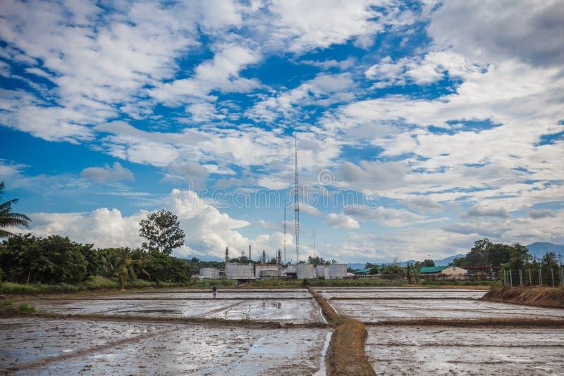 Lege padievelden na oogsten die met fabriek en aardige hemel wachten worden geplant royalty-vrije stock foto's