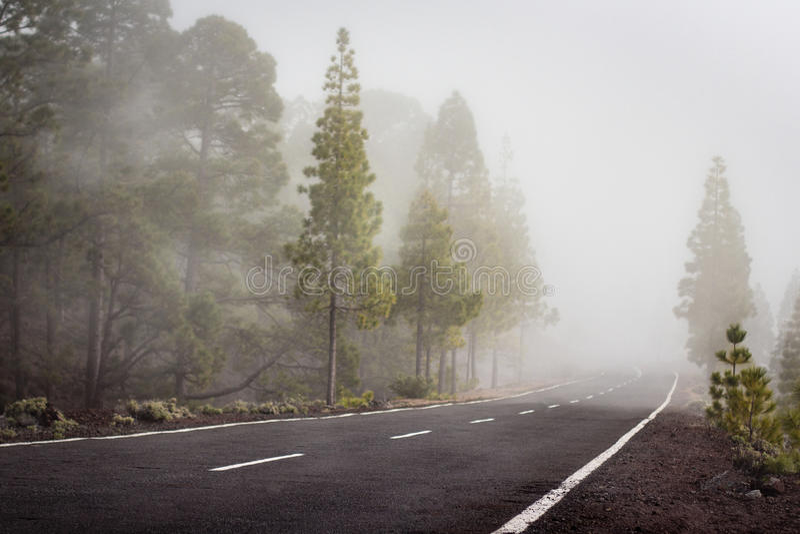 Lege weg in mistig boslandschap - stock foto