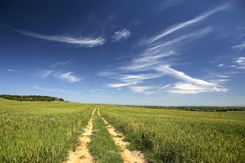 Lege weg in mooi landelijk landschap stock afbeeldingen