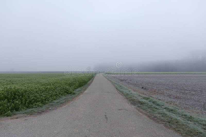 Lege weg in platteland op een mistige dag stock afbeelding