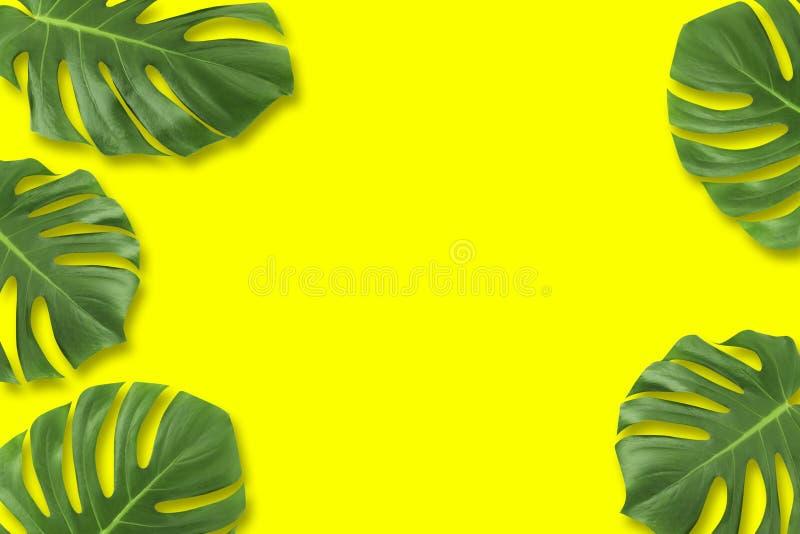 Legen tropische Ebene Blatt des kreativen Plansommers Zusammensetzung Grüne Tropen lassen Rahmen mit Kopienraum auf gelbem Pastel stock abbildung