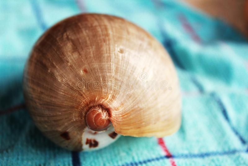 Legend för hopsamling för Shell souvenirsamling royaltyfri bild