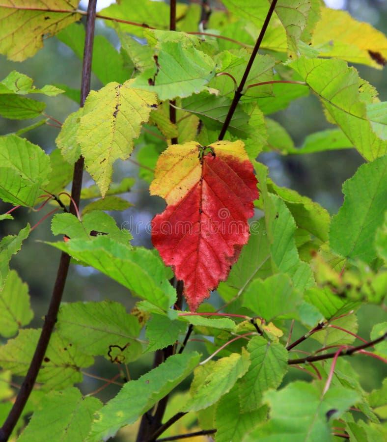 Legenden des Herbstes stockbild
