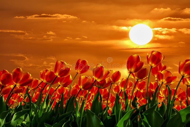 Legga i tulipani fotografia stock