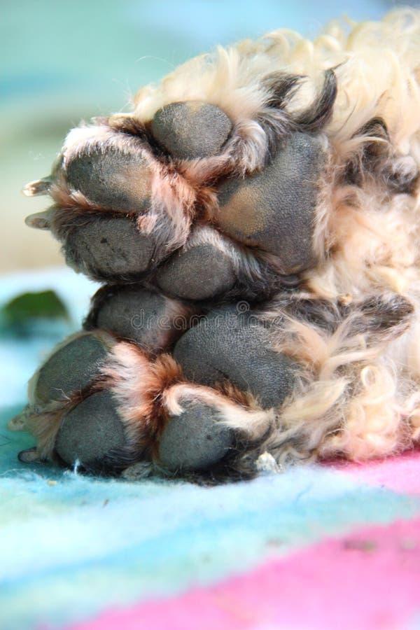 Legged hond stock foto's