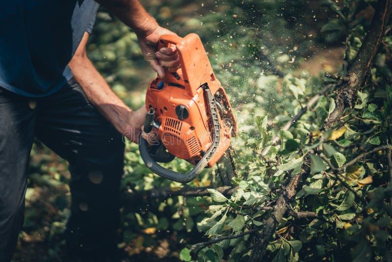 Legna da ardere di taglio del lavoratore del boscaiolo in foresta con una motosega professionale fotografie stock