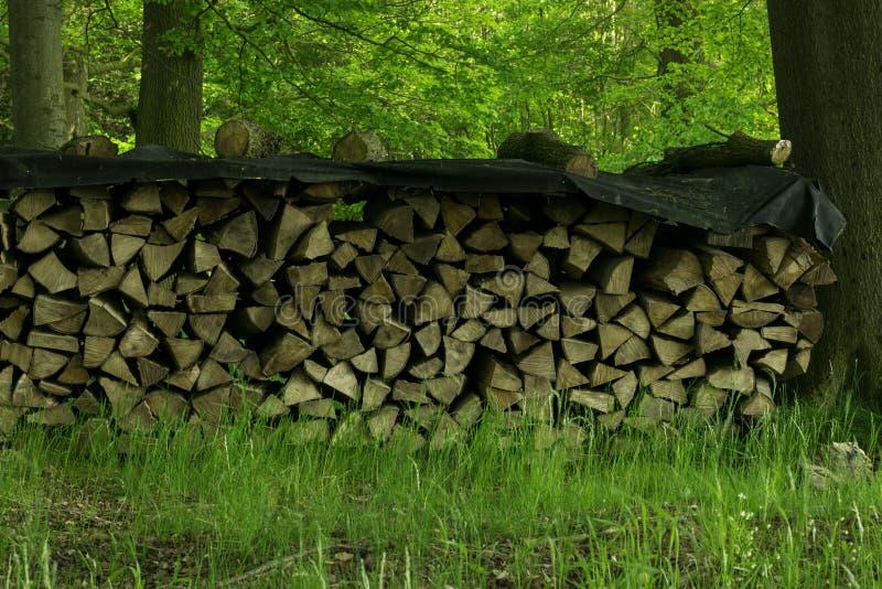 Legna da ardere impilata in Forest In Lower Saxony immagini stock