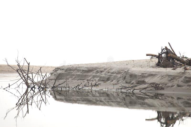 Legname di legno del ramo dopo la tempesta nel fiume immagini stock libere da diritti