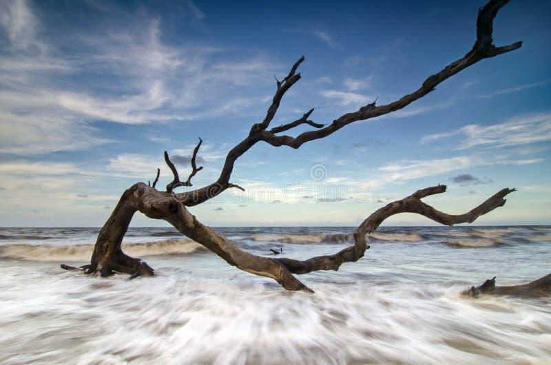 Legname galleggiante dell'isola di Jekyll immagine stock libera da diritti
