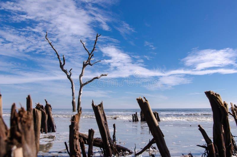 Legname galleggiante ed alberi morti sulla spiaggia al parco di stato dell'isola di caccia fotografia stock