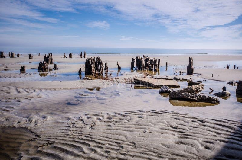Legname galleggiante ed alberi morti sulla spiaggia al parco di stato dell'isola di caccia immagini stock libere da diritti