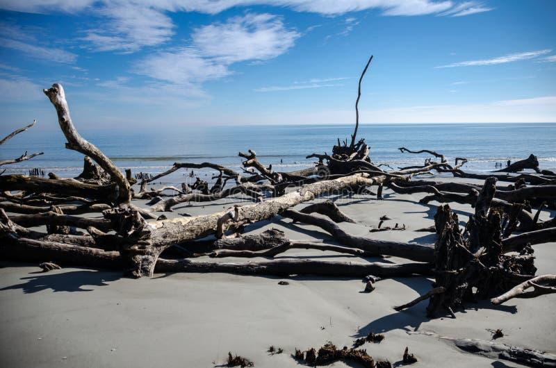 Legname galleggiante ed alberi morti sulla spiaggia al parco di stato dell'isola di caccia immagini stock