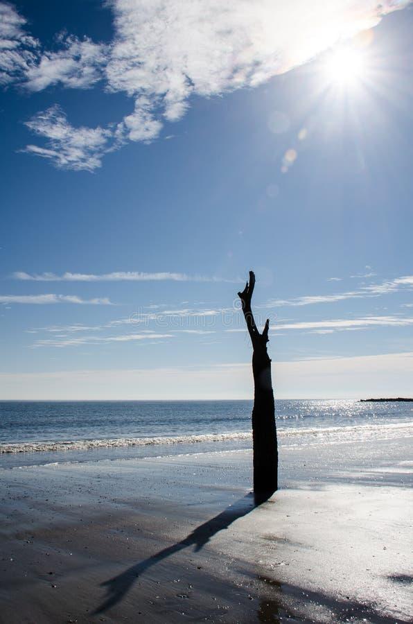 Legname galleggiante ed alberi morti sulla spiaggia al parco di stato dell'isola di caccia in Carolina del Sud fotografie stock libere da diritti