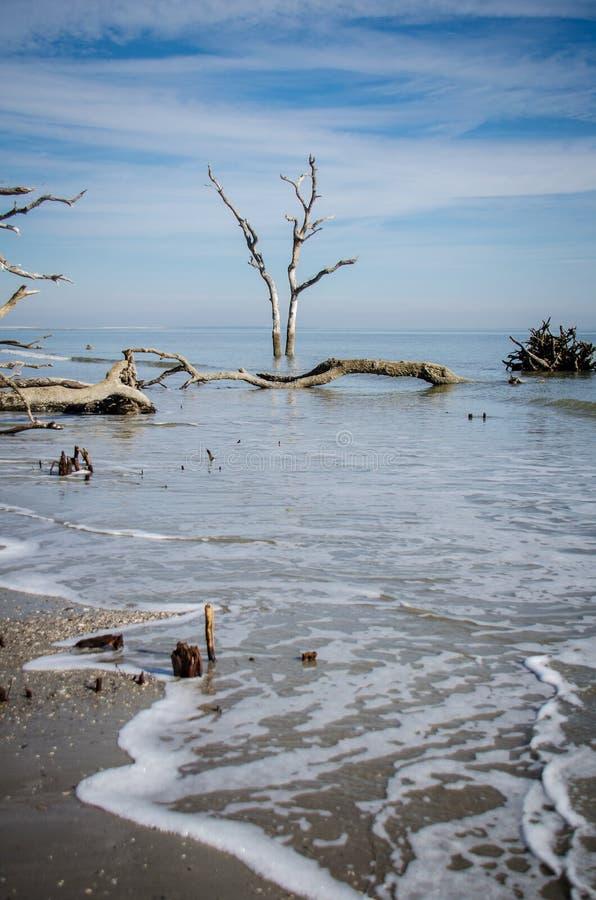 Legname galleggiante ed alberi morti sulla spiaggia al parco di stato dell'isola di caccia in Carolina del Sud immagine stock