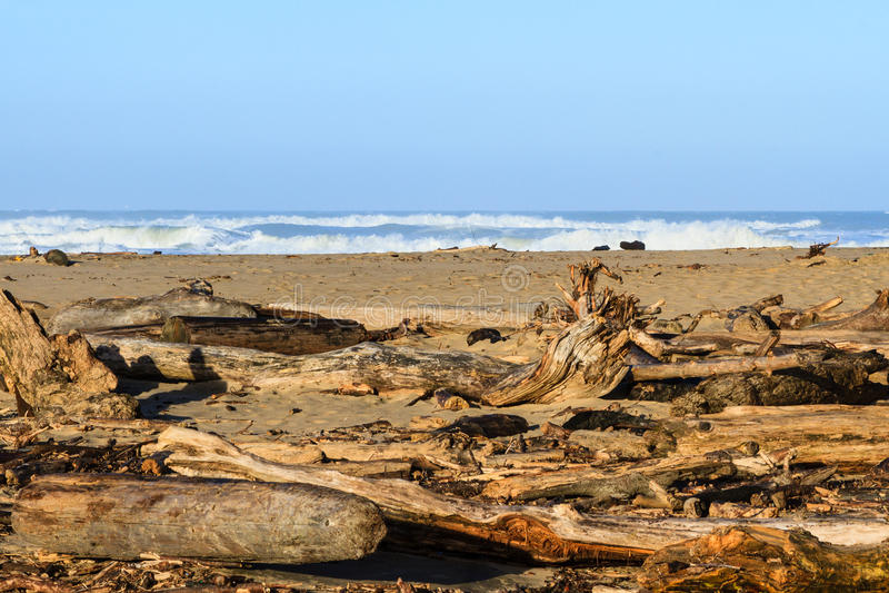 Legname galleggiante su una spiaggia centrale di California immagini stock