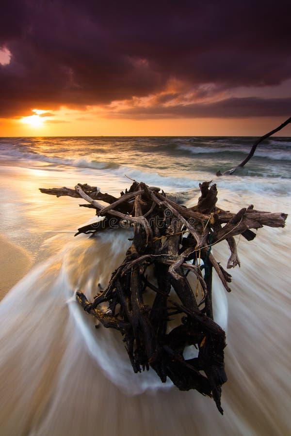 Legname galleggiante su una spiaggia con le onde drammatiche ed il tramonto fotografia stock libera da diritti