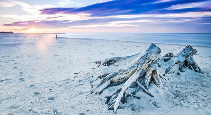 Legname galleggiante su una spiaggia in Ustka, Mar Baltico, Polonia immagine stock libera da diritti