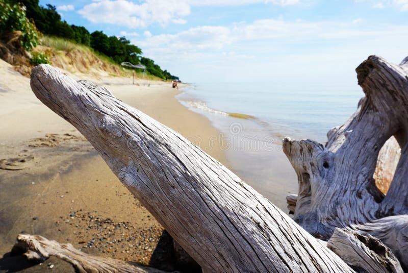Legname galleggiante sulla riva nei precedenti Sandy Beach con la HU fotografia stock libera da diritti