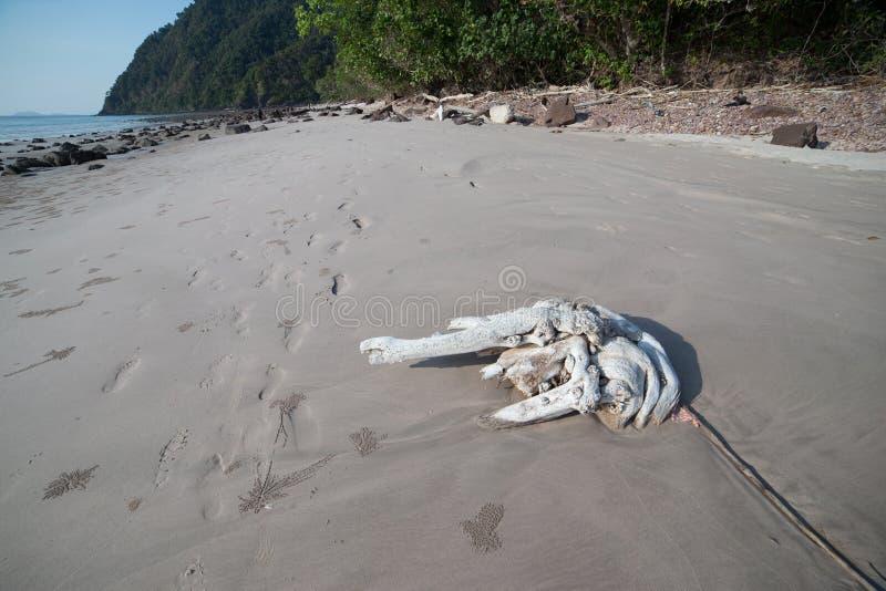 Legname galleggiante sulla spiaggia fotografia stock