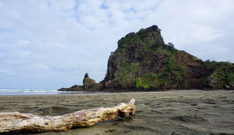 Legname galleggiante sulla spiaggia di Piha che esamina Lion Rock fotografia stock libera da diritti