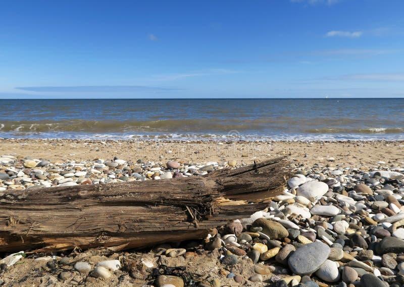 Legname galleggiante sulla spiaggia di stoney fotografia stock libera da diritti