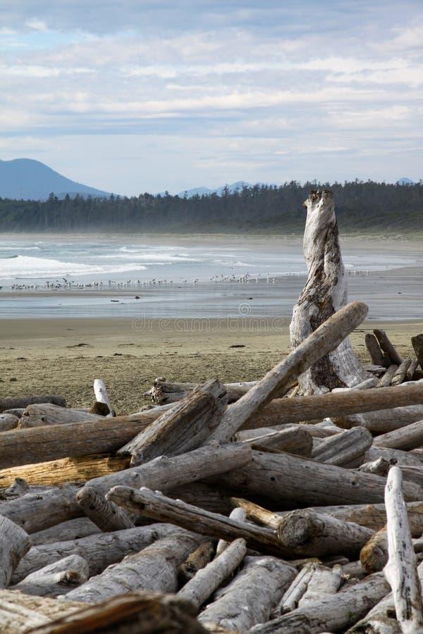 Legname galleggiante sulla spiaggia immagini stock libere da diritti