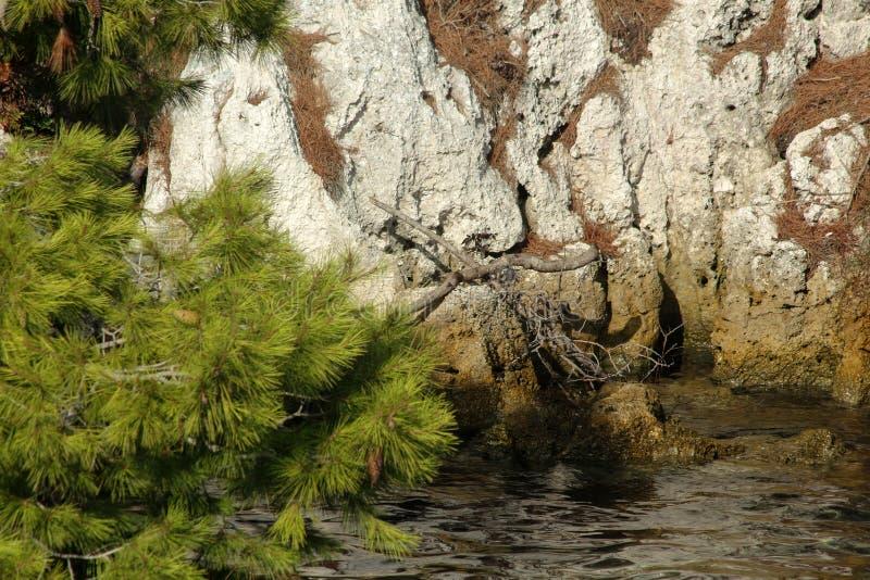 Legno, acqua e roccia immagini stock