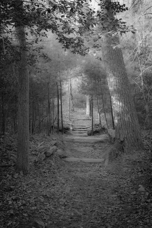 Legno blu di Ridge Mountains Trail Into The fotografie stock