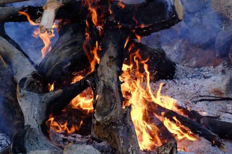 Legno bruciante in un fuoco del campo immagine stock libera da diritti