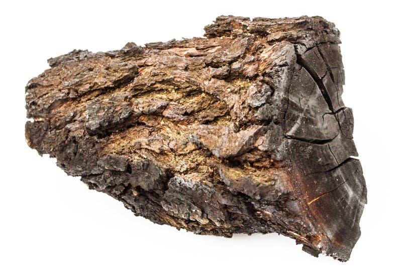 Legno carbonizzato con la corteccia isolata su fondo bianco immagine stock