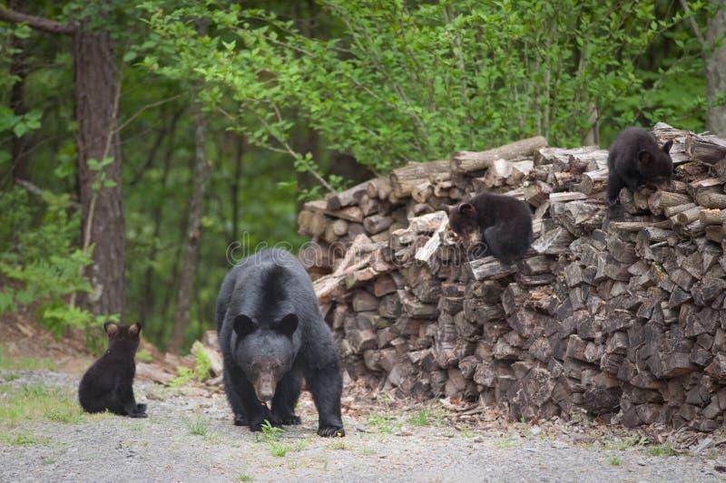 legno del mucchio degli orsi immagini stock libere da diritti