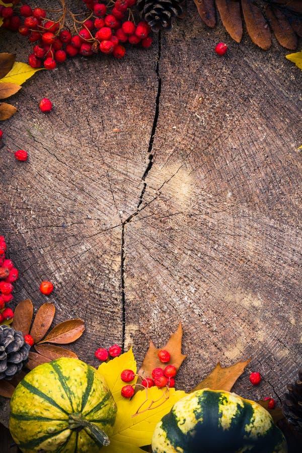 Legno della natura dei regali del fondo di autunno fotografia stock