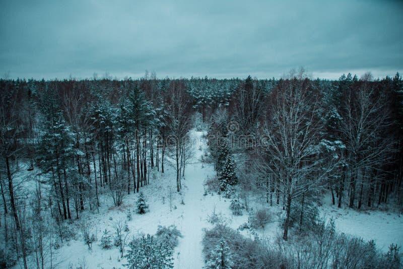 Legno della neve fotografia stock