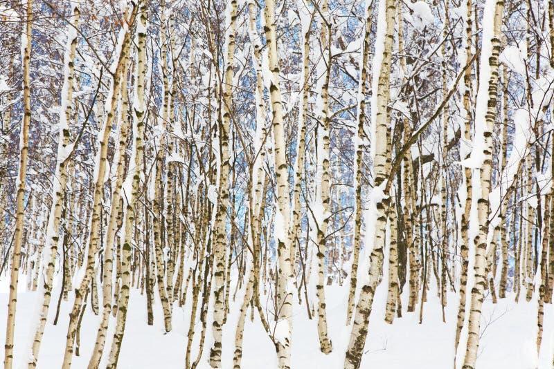 Download Legno dello Snowy immagine stock. Immagine di paesaggio - 7313047