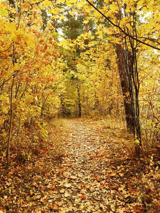 Legno di autunno fotografia stock libera da diritti