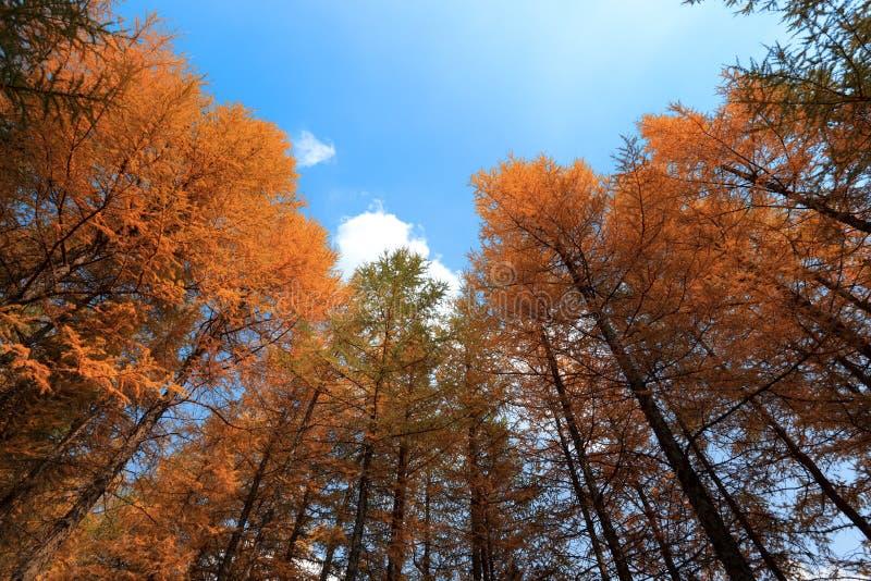 Legno di autunno sotto il cielo fotografie stock libere da diritti