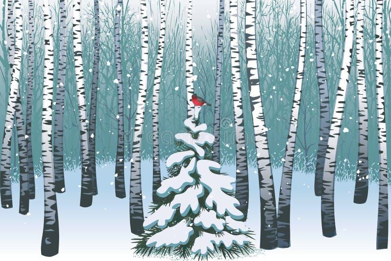 Legno di betulla di inverno illustrazione vettoriale