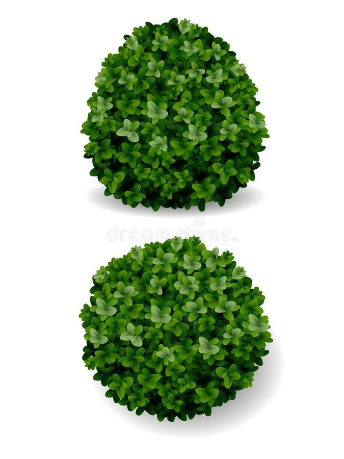 Legno di bosso decorativo di Bush illustrazione vettoriale