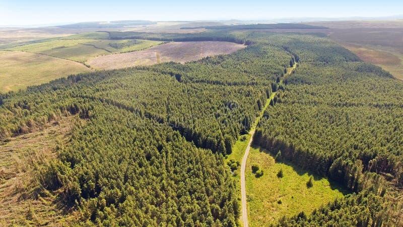 Legno di Capanagh Moss Bog Furr Forest in Irlanda fotografia stock